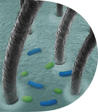 microbioom Onevenwicht