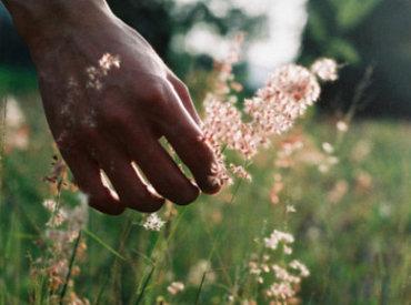 De 10 beste planten voor een 'zen overgang'